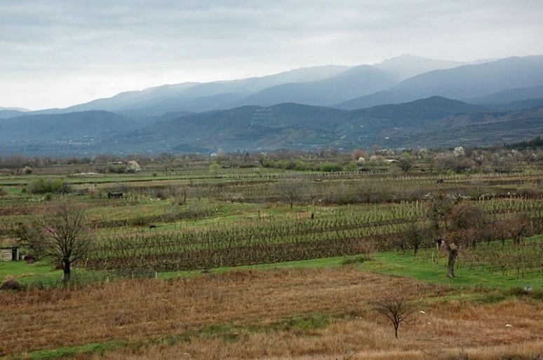 Vineyards, near Badiauri, Kakheti Region, Georgia