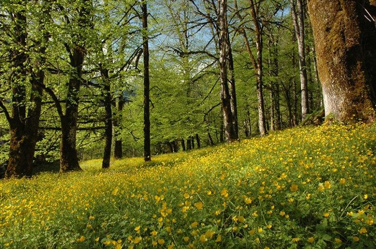 Spring Flowers, Bzhipi Valley, Abkhazia