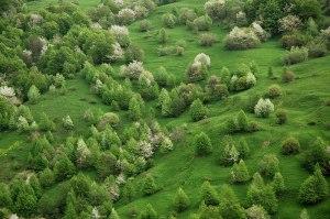 Hillside, Kemulta, South Ossetia