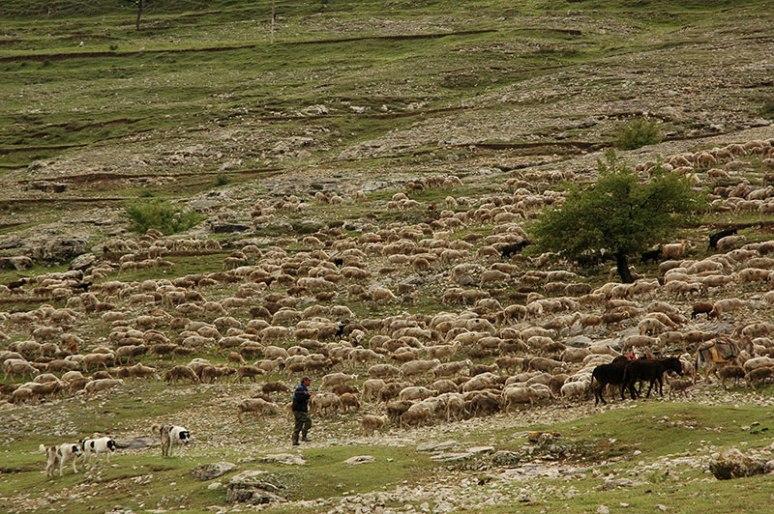 Shepherds, Tsudakhar, Dagestan Republic, Russia