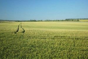 Fields, near Rossosh, Voronezh Region, Russia