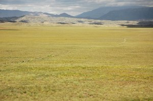 Great Gobi 'B' Strictly Protected Area, Govi-Altai Province, Mongolia