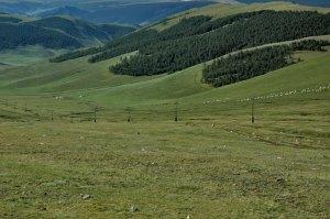 Forested Hills, near Uliastai, Zavkhan Province, Mongolia