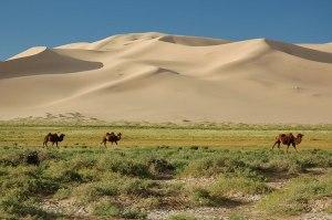 Khongoryn Els, Ömnögovi Province, Mongolia