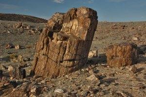 Petrified Tree, Mt Suikhent, Dornogovi Province, Mongolia