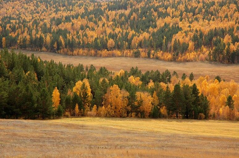Taiga, near Petrovsk-Zabaikalsky, Zabaikal Territory, Russia