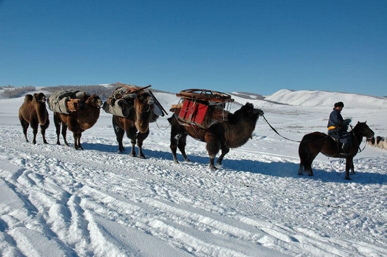 Camel Caravan, near Tsetserleg, Khövsgöl Province, Mongolia