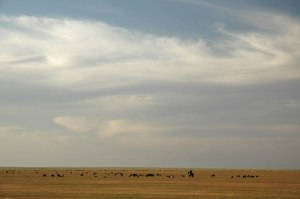 Steppe, near Shardara, South Kazakhstan Region, Kazakhstan