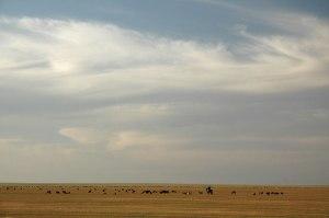 Steppe, near Shardara, South Kazakhstan Region, Kazakhstan