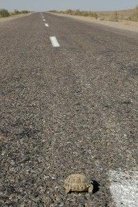 A381 Highway, Kyzylorda Province, Kazakhstan