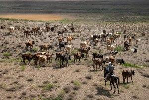 Cowboy, near Tazakand, Nakhchivan Autonomous Republic, Azerbaijan