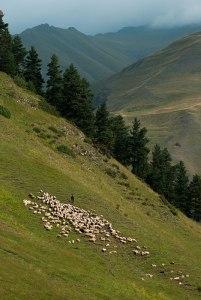 Tushetis Alazani Valley, near Verkhovani, Kakheti Region, Georgia
