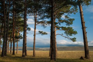 Forest, near Apnia. Samtskhe-Javakheti Region, Georgia